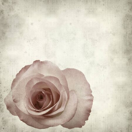 gentle: textured old paper background with gentle pink rose
