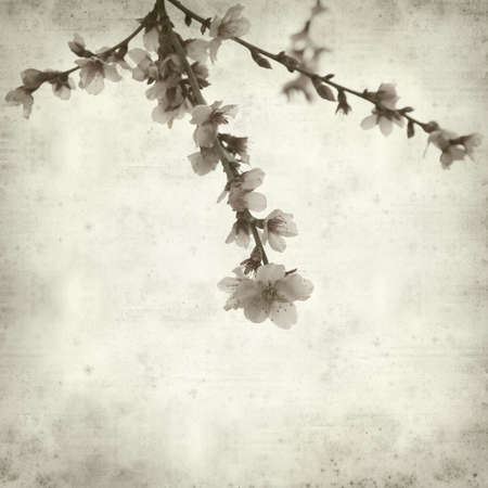 textured paper: textured old paper background with almond blossoms