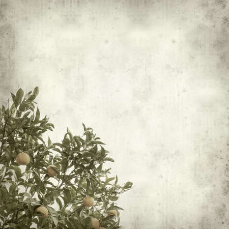 textured paper: textured old paper background with growing oranges