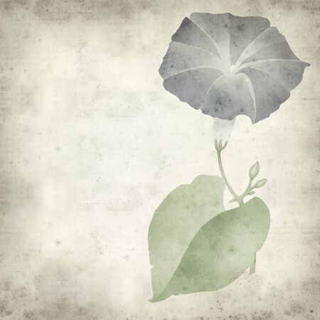 moonflower: textured old paper background with blue ipomoea flower illustration