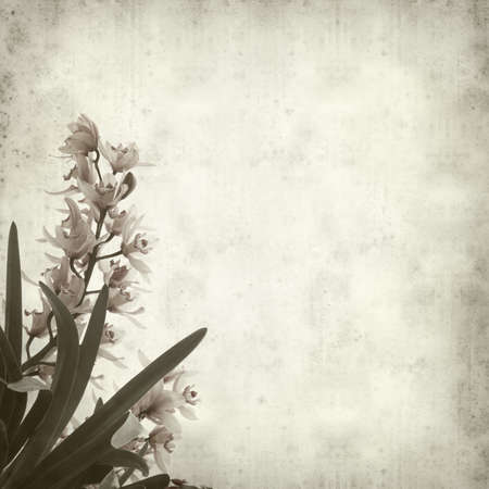 textured paper: textured old paper background with growing orchid