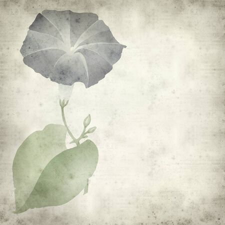 convolvulus: textured old paper background with blue ipomoea flower illustration