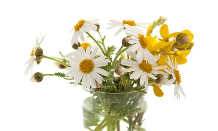 argyranthemum: small bunch of canarian marguerite daisy isolated on white background