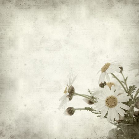 canarian: textured old paper background with canarian marguerite daisy