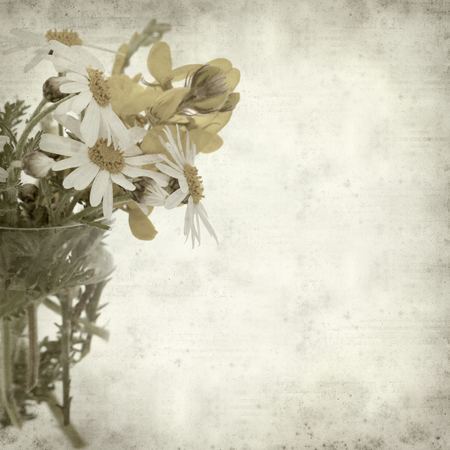 argyranthemum: textured old paper background with canarian marguerite daisy