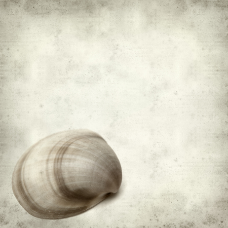 textured paper background: textured old paper background with clam shell Stock Photo