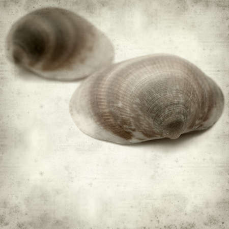 textured paper: textured old paper background with clam shell Stock Photo