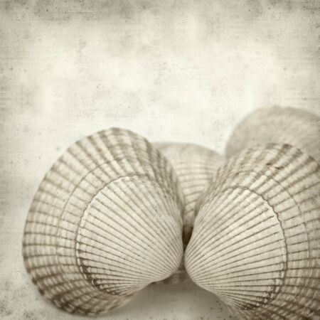 cockleshells: textured old paper background with cockleshells