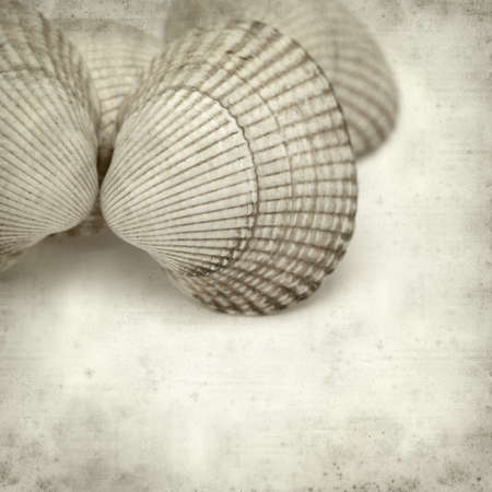 textured paper background: textured old paper background with cockleshells