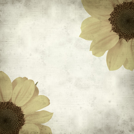 textured paper background: textured old paper background with yellow sunflower Stock Photo