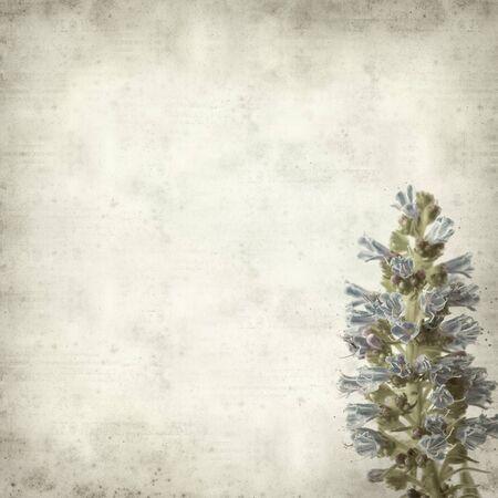 echium: textured old paper background with Echium callithyrsum, flowering plant native toGran Canaria Stock Photo