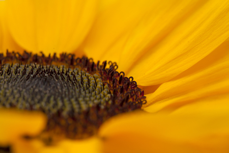 backgound: sunflower center natural floral macro backgound Stock Photo