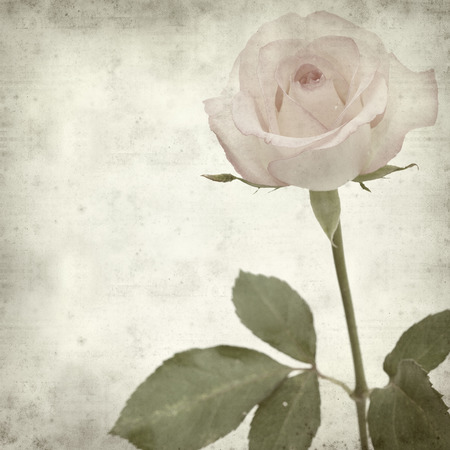 Textured old paper background with pale pink rose flower stock photo textured old paper background with pale pink rose flower mightylinksfo