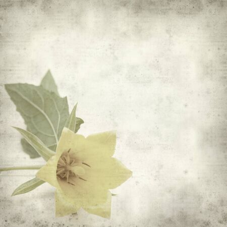canariensis: textured old paper background with Canarina canariensis, flowering plant native to Canary Islands Stock Photo
