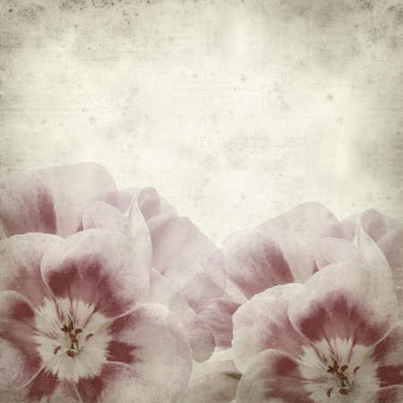 old paper background: textured old paper background with pink geranium Stock Photo