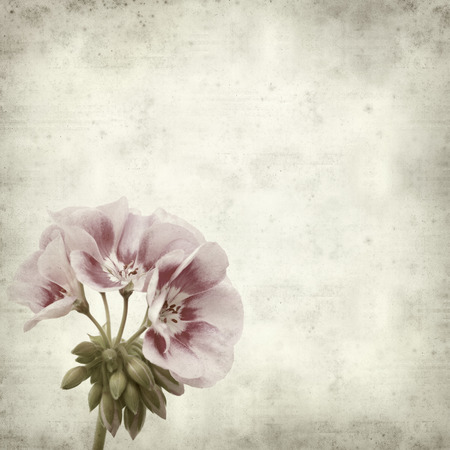 textured paper background: textured old paper background with pink geranium Stock Photo