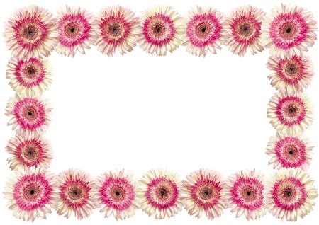 herbera: white and magenta gerbera photographic frame, standard paper size