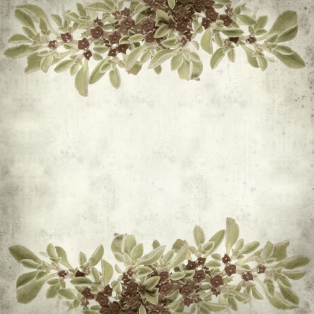 iceplant: textured old paper background with succulent plant  Aizoon canariense, Canarian iceplant