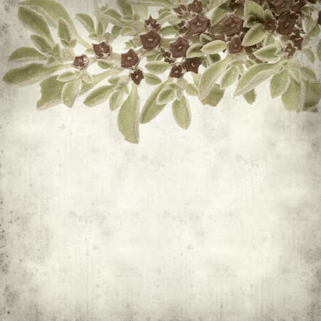 textured old paper background with succulent plant  Aizoon canariense, Canarian iceplant