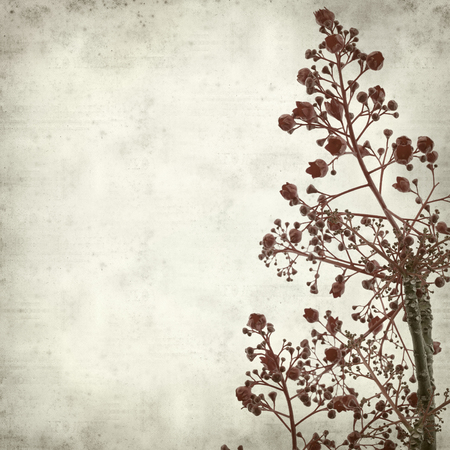 floral grunge: textured old paper background with Brachychiton acerifolius,  Illawarra Flame Tree