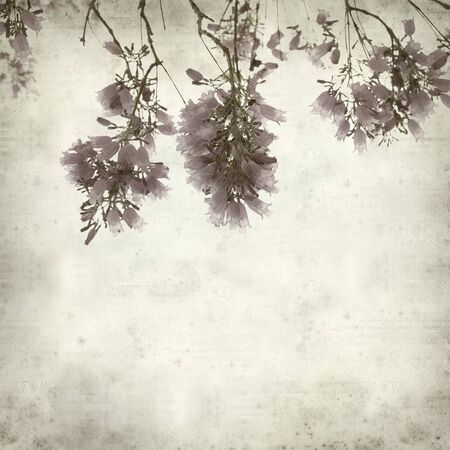 floral grunge: textured old paper background with lilac jacaranda flowers