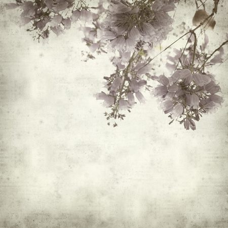 blooming  purple: textured old paper background with lilac jacaranda flowers