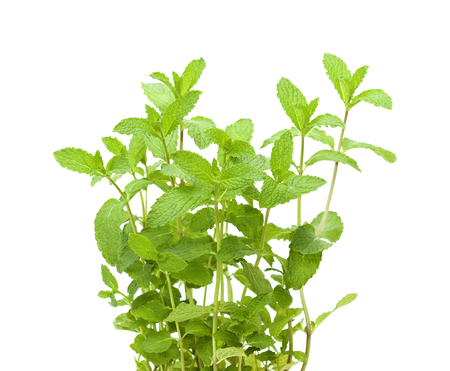sprigs: growing garden  mint plants isolted on white