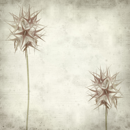 trifolium: textured old paper background with starry clover,  Trifolium stellatum seedheads Stock Photo