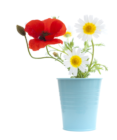 coronarium: simple posy of Poppy and garland chrysanthemums isolated on white background Stock Photo