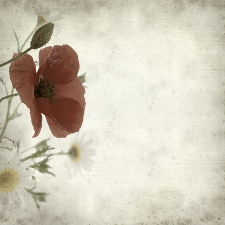 posy: textured old paper background with simple posy of daisies and poppy Stock Photo
