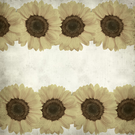 textured paper background: textured old paper background with sunflower border