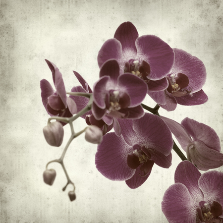 phal: textured old paper background with