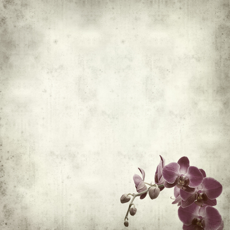 textured paper background: textured old paper background with