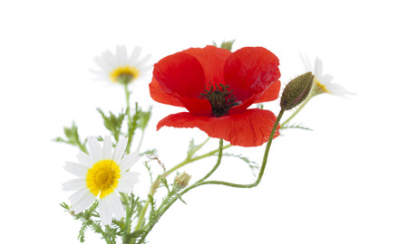 posy: simple posy of Poppy and garland chrysanthemums isolated on white background Stock Photo