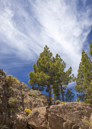 Gran Canaria, Rock formations and Pine trees at Risco Chapi