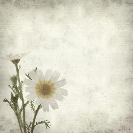 coronarium: textured old paper background with garland chrysanthemum