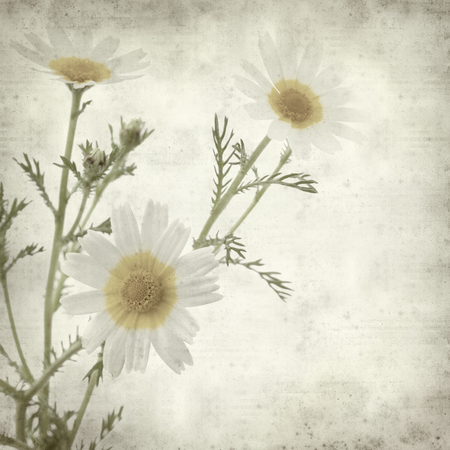 textured paper background: textured old paper background with garland chrysanthemum