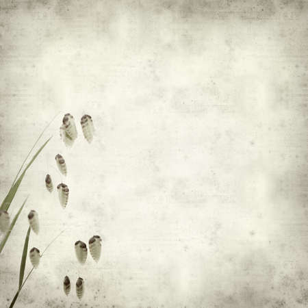 quacking: textured old paper background with Briza, quacking grass