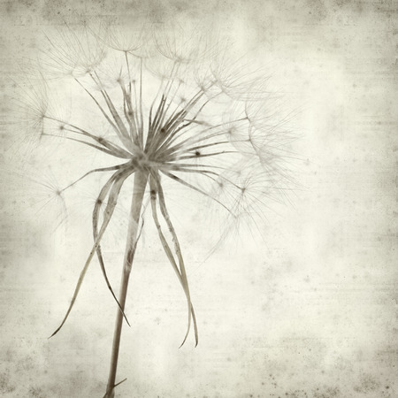 deeds: textured old paper background with salsify seedhead