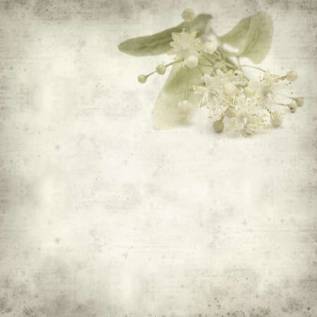 medicinal herb: textured old paper background with medicinal herb lime blossom Stock Photo