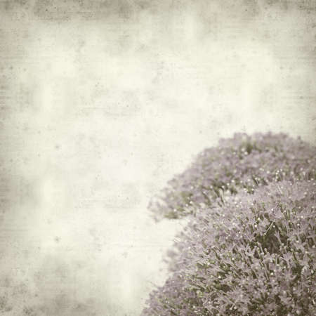 clustered: textured old paper background with small lilac pentas flowers Stock Photo