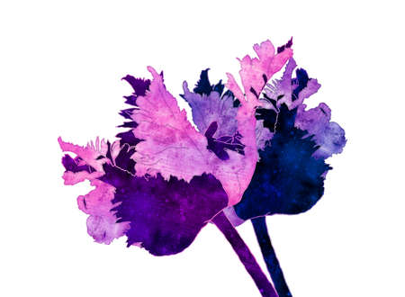 parrot tulip illustration with old paper texture on white background