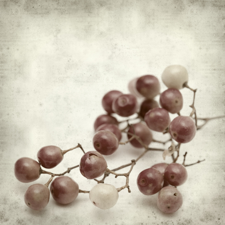 peppertree: textured old paper background with pink peppercorn berries