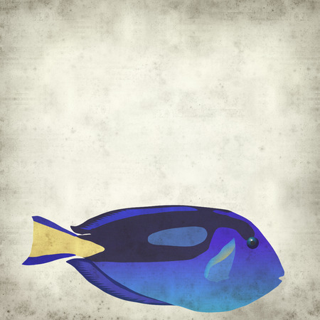 tang: textured old paper background with royal blue tang tropical fish digital illustration