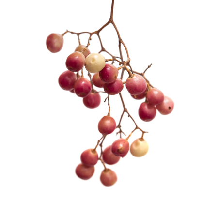 peppertree: pink peppercorn clusters isolated on white background Stock Photo