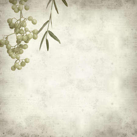 peppertree: textured old paper background with unripe pink peppercorn berries