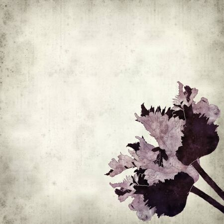dry flowers: textured old paper background with parrot tulip illustartion Stock Photo
