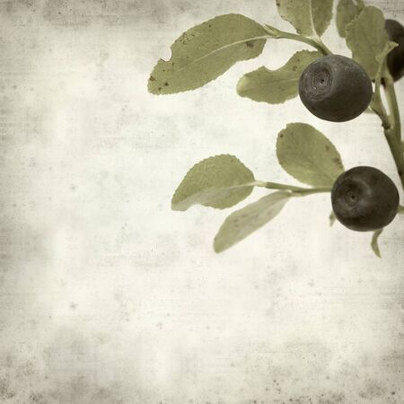 bilberry: textured old paper background with bilberry plant branch