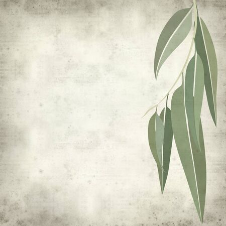 interesting: textured old paper background with eucalyptus leaves illustration