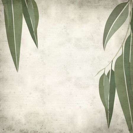 eucalyptus: textured old paper background with eucalyptus leaves illustration